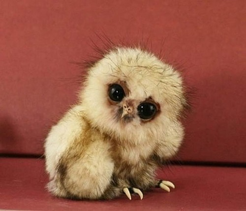 baby-Animal-animals-35568618-500-428.jpg