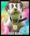 i got bling - dogs fan art