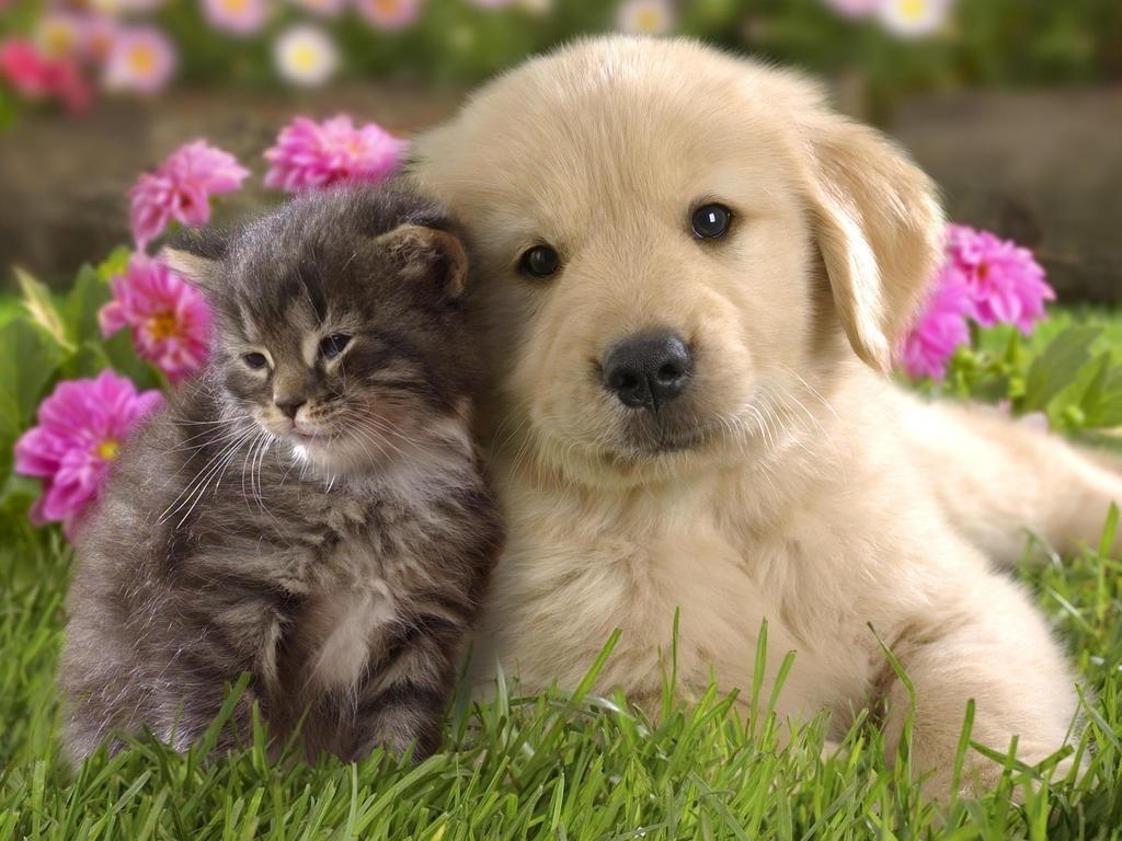 Cute kittens kitten