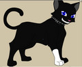 scourge - warrior-cats photo