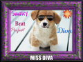 miss diva  - puppies fan art