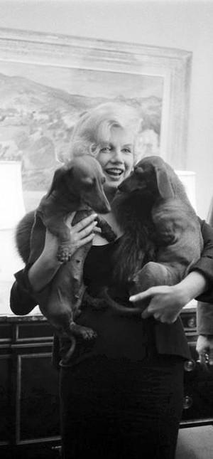 Marilyn with dachs !