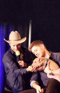 Misha and Jensen - Dallas Con 2013