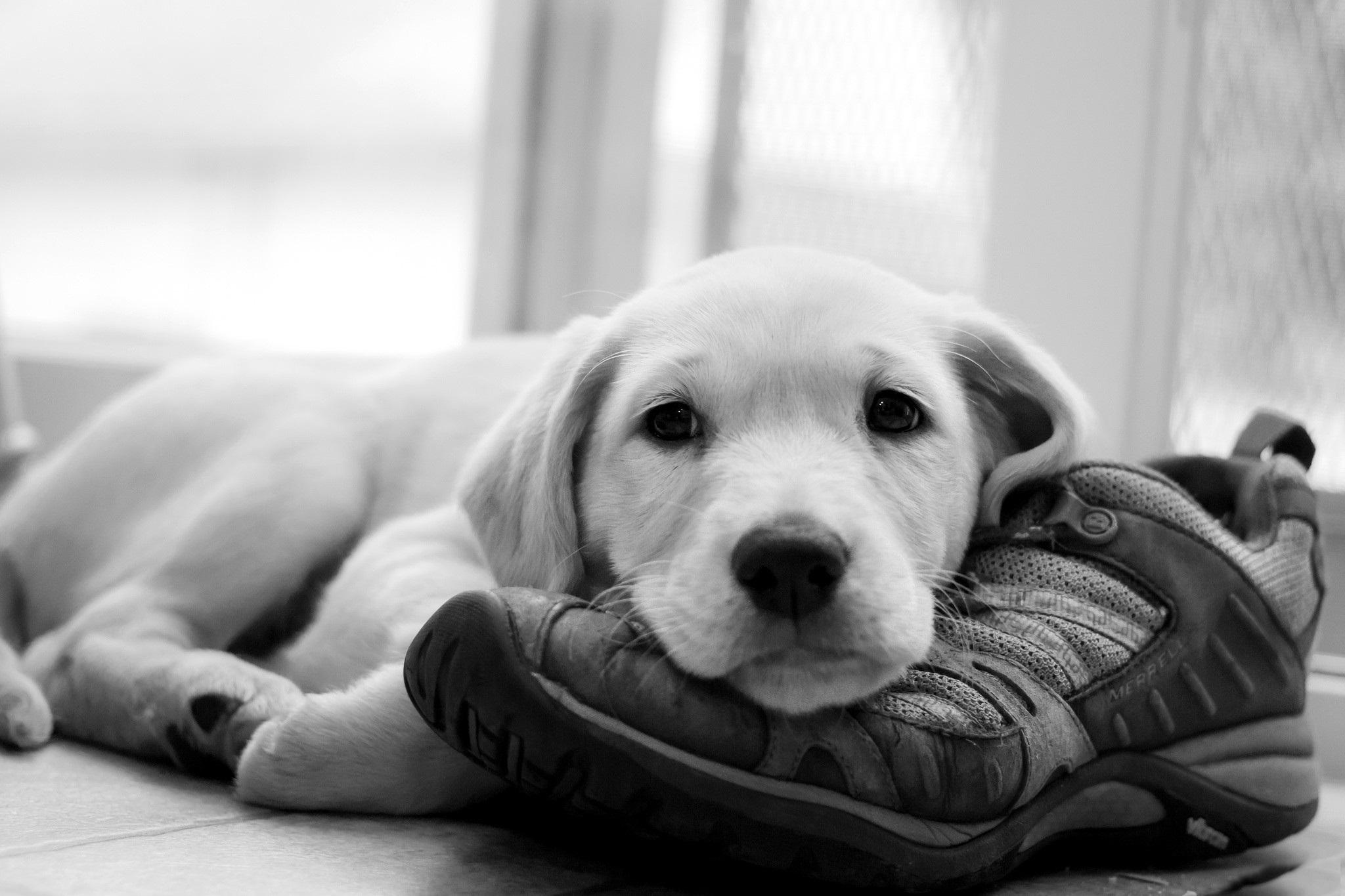 Dogs Ecosia
