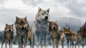 Twilight Saga serigala