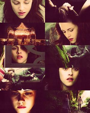Twilight Saga ♚