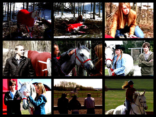 Heartland 壁紙 with a lippizan, a horse trail, and a horse wrangler called amy