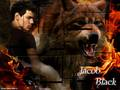 twilight-series - jacob wallpaper