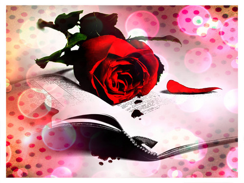 Flowers wallpaper probably containing a bouquet and a rose called rose and bible