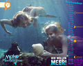 september 2013 - mako-mermaids wallpaper