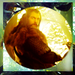 'The Hobbit' - the-hobbit-an-unexpected-journey icon