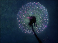 Dandelion Seed Head - fantasia photo