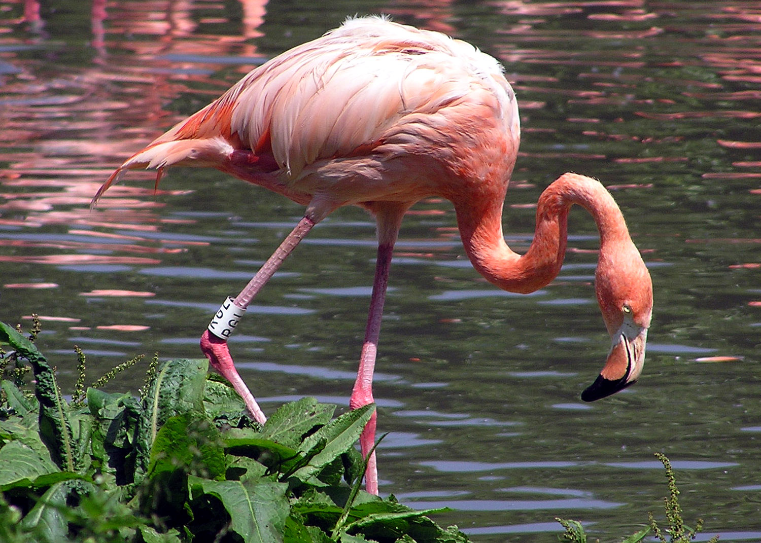 10 fascinating flamingo facts  Discover Wildlife