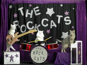 cat guitare