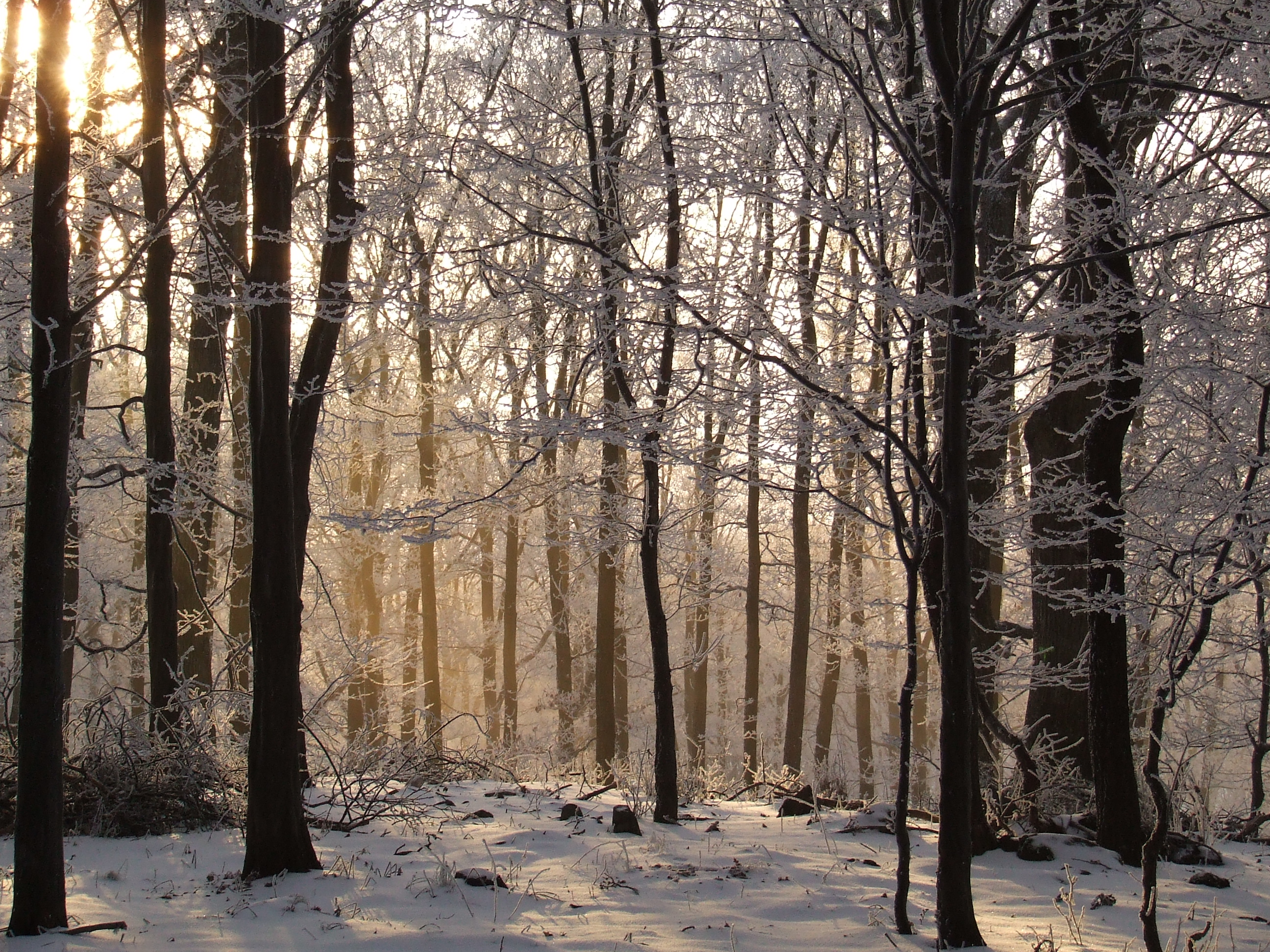 have fun images winter forest hd wallpaper and background