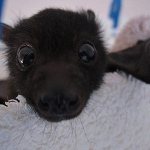 Young Marceline in bat form