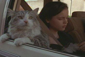 "1997 disney Film, ""That Darn Cat"""