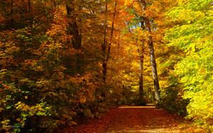 Autumn پیپر وال