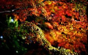 Autumn fond d'écran