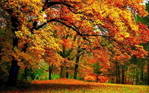 Autumn Images Autumn Fond D 233 Cran Hd Fond D 233 Cran And