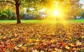 autumn - Autumn Wallpaper wallpaper