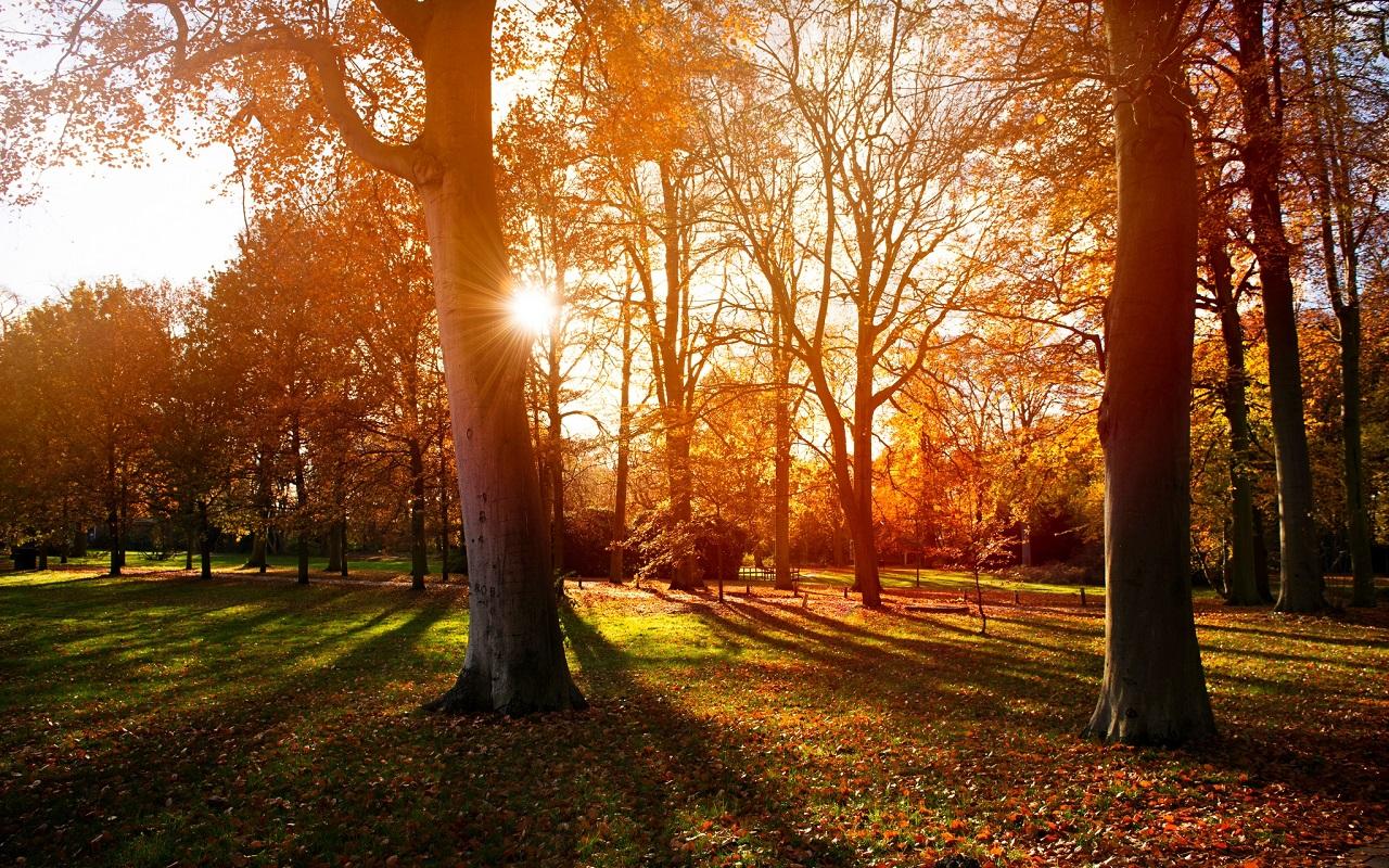 Autumn वॉलपेपर