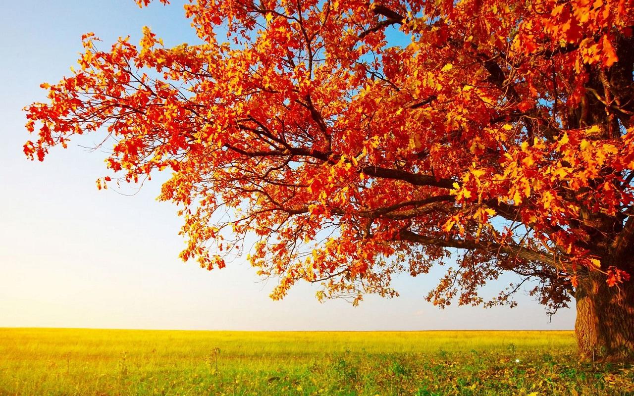 秋を感じるおしゃれな壁紙まとめ , NAVER まとめ