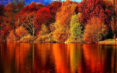 Image result for images of autumn