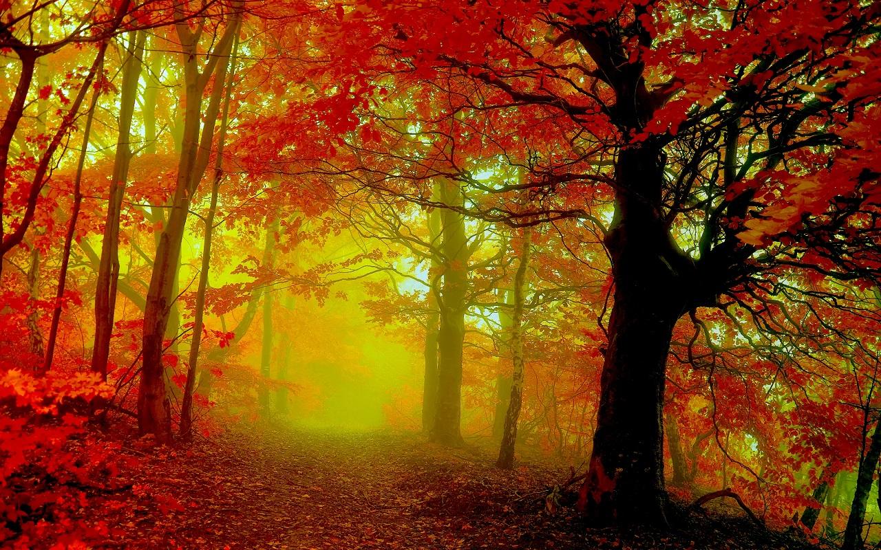 Autumn kertas dinding