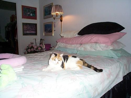 小猫 壁纸 possibly with a cat, a kitten, and a living room called Cami