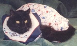 Cat Wearing A Dress
