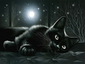 Cat  - cats wallpaper
