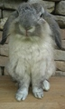 Kiki - bunny-rabbits photo