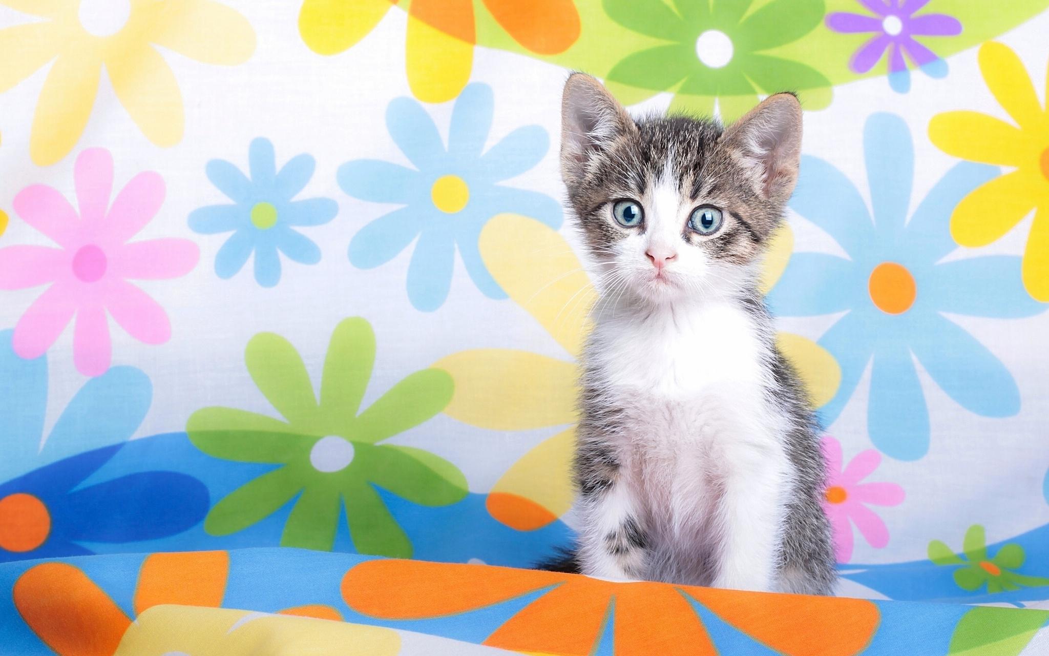 Kitty - Cats Wallpaper (35832043) - Fanpop