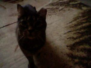 My cat, Sierra