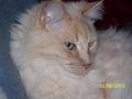 "Sweet ""Chester"" - fanpop-pets photo"