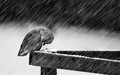 bird in the rain - sad-songs photo