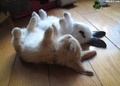 lazy bunns - bunny-rabbits photo