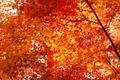 Autumn - autumn photo