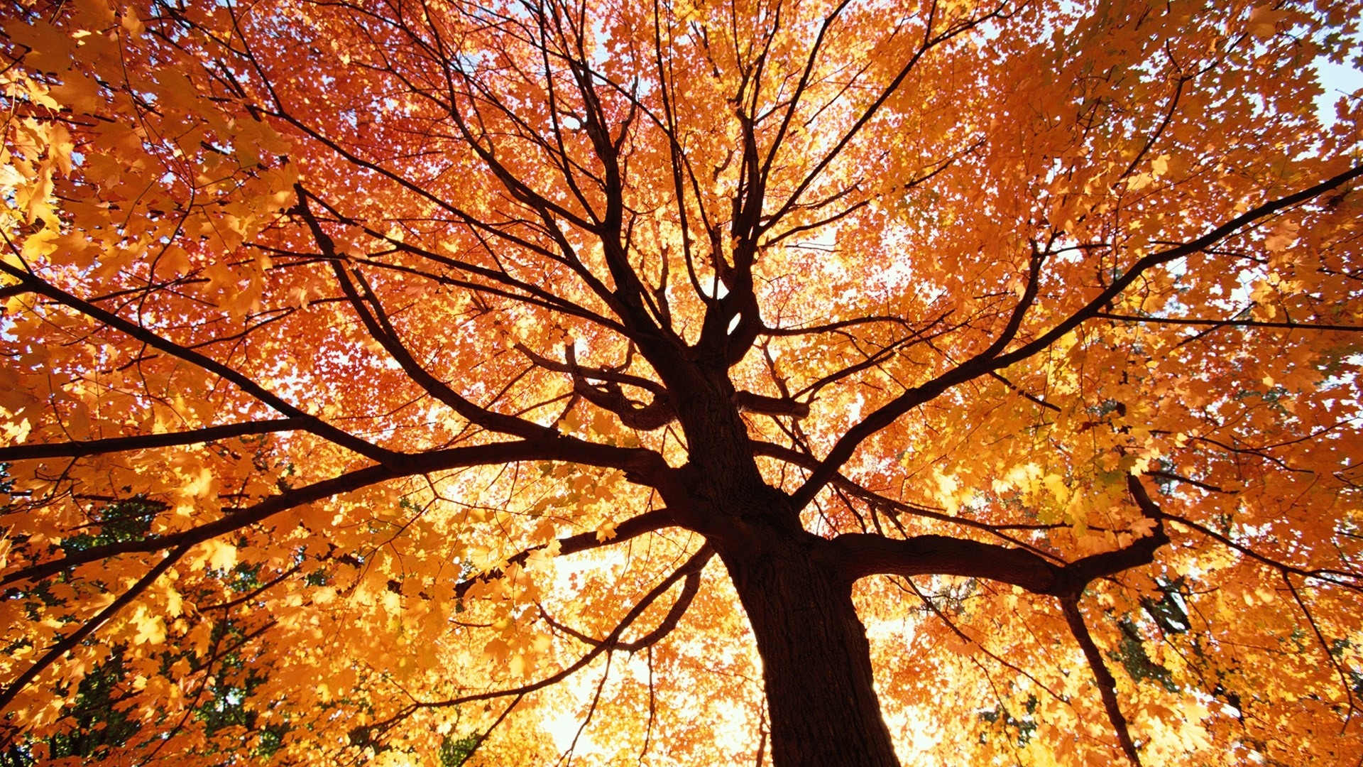 Autumn - Autumn Photo (35926505) - Fanpop