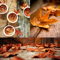 Autumn  - autumn photo