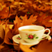 Autumn ~ ♥ - autumn icon