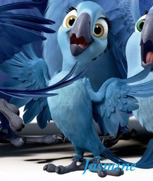 Carla the baby Blue macaw