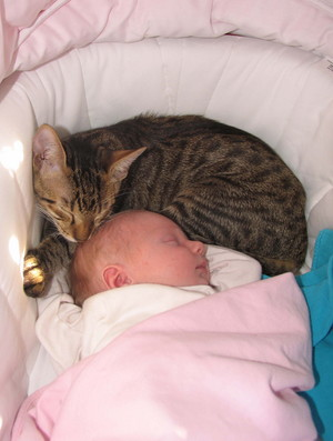 Cat Taking A Nap With The Baby