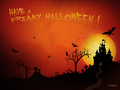 Halloween - halloween photo