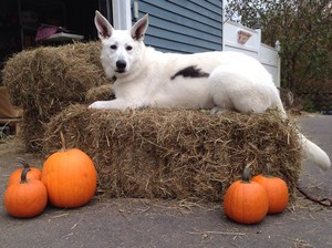 Happy Halloween from Bolt!