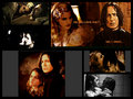 SS/HG my love - hermione-and-severus wallpaper