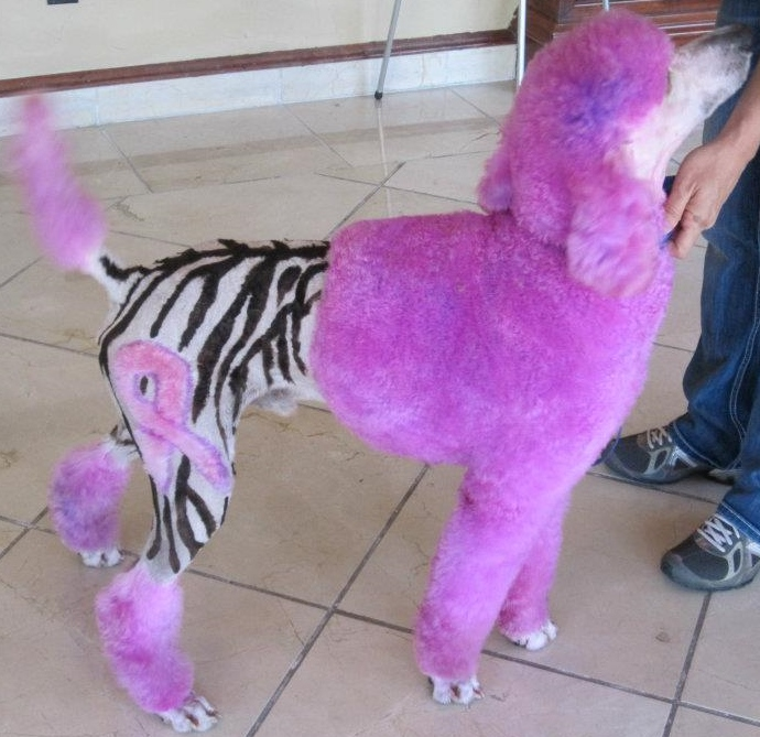Posh Poodle Dog Grooming