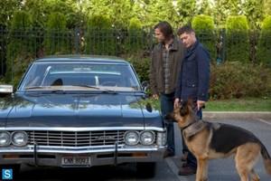 Supernatural - Episode 9.05 - Dog Dean Afternoon - Promotional mga litrato