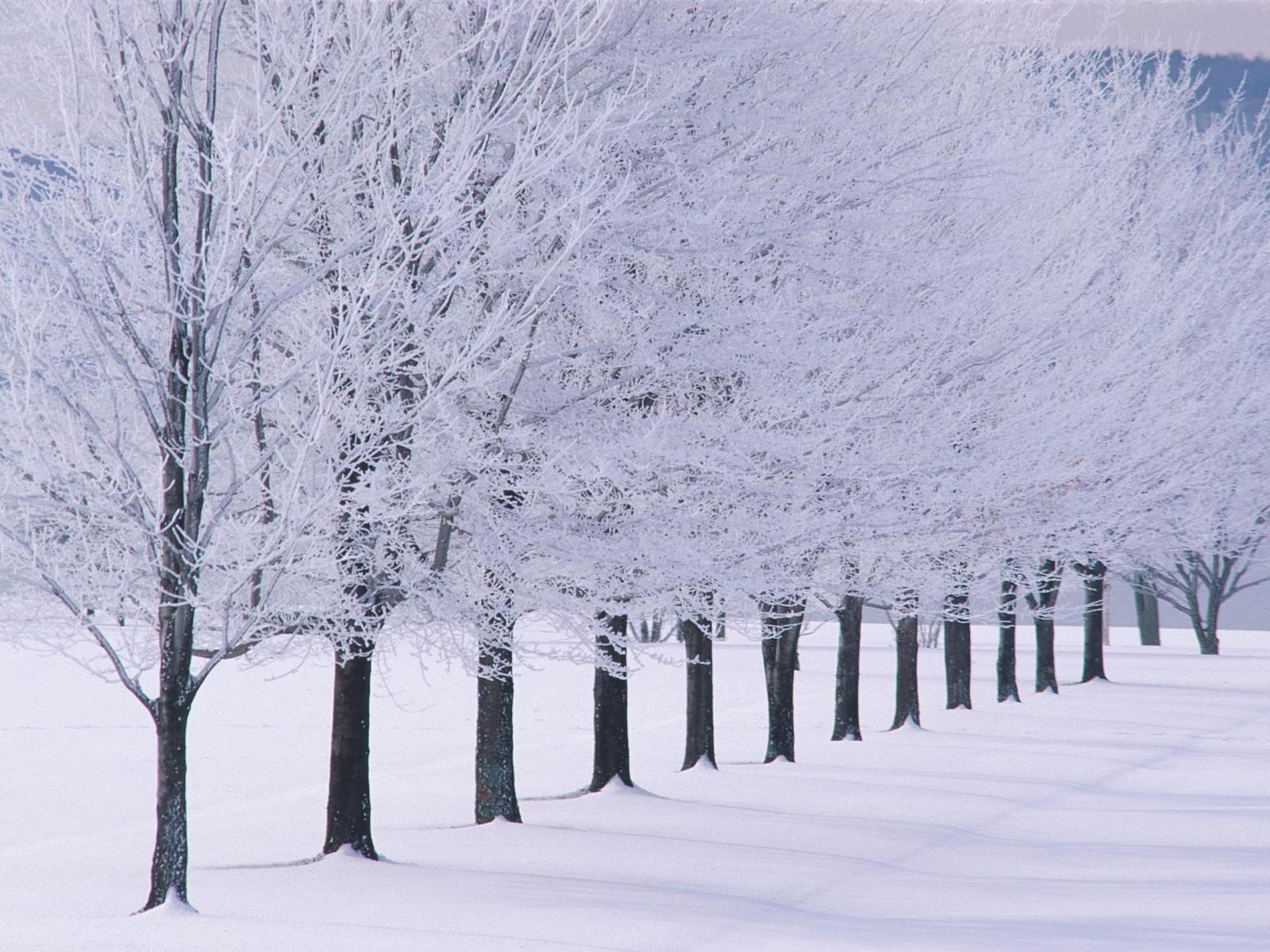 Winter Scenery - Random Photo (35926792) - Fanpop
